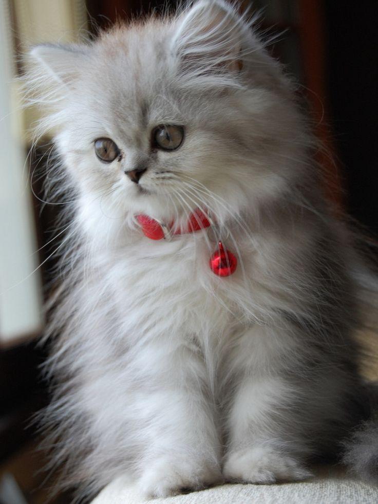 Chr. kitten