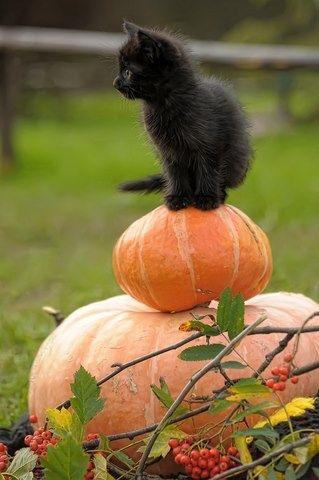 Kitten for halloween