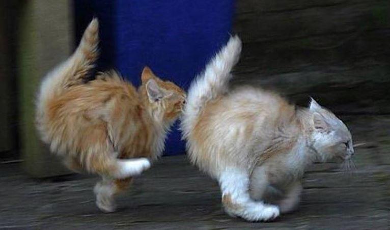 Racing kittens