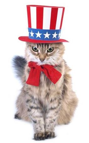 July 4th cat