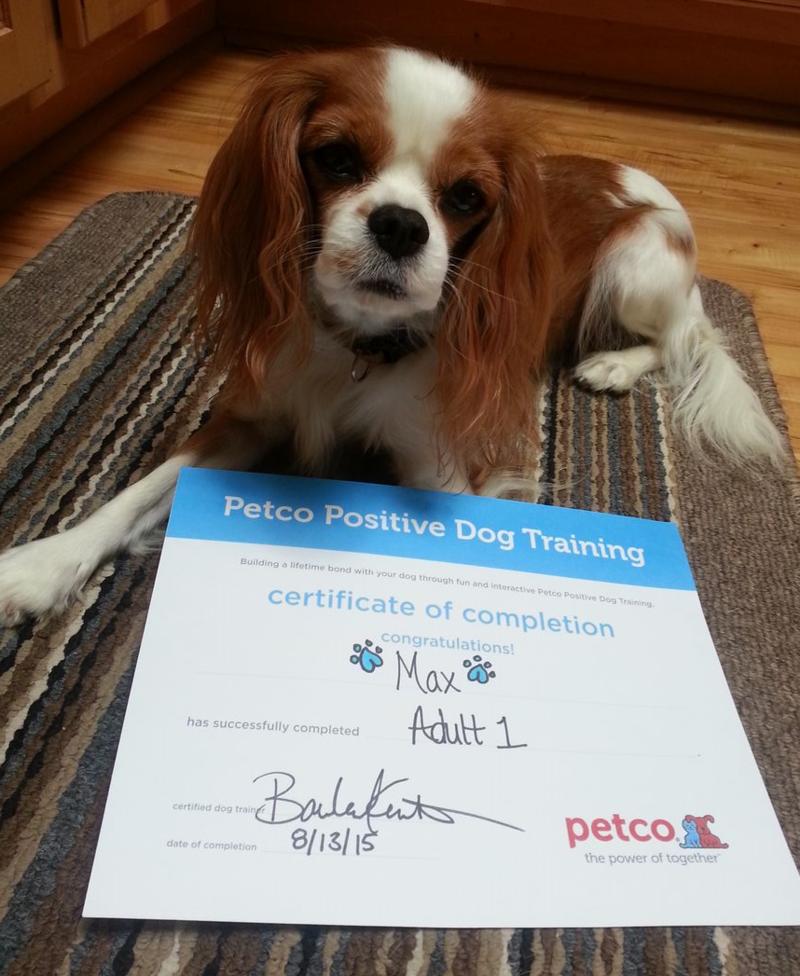 8-13-2015 certificate