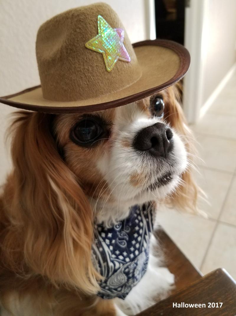 Halloween 2017 Sheriff